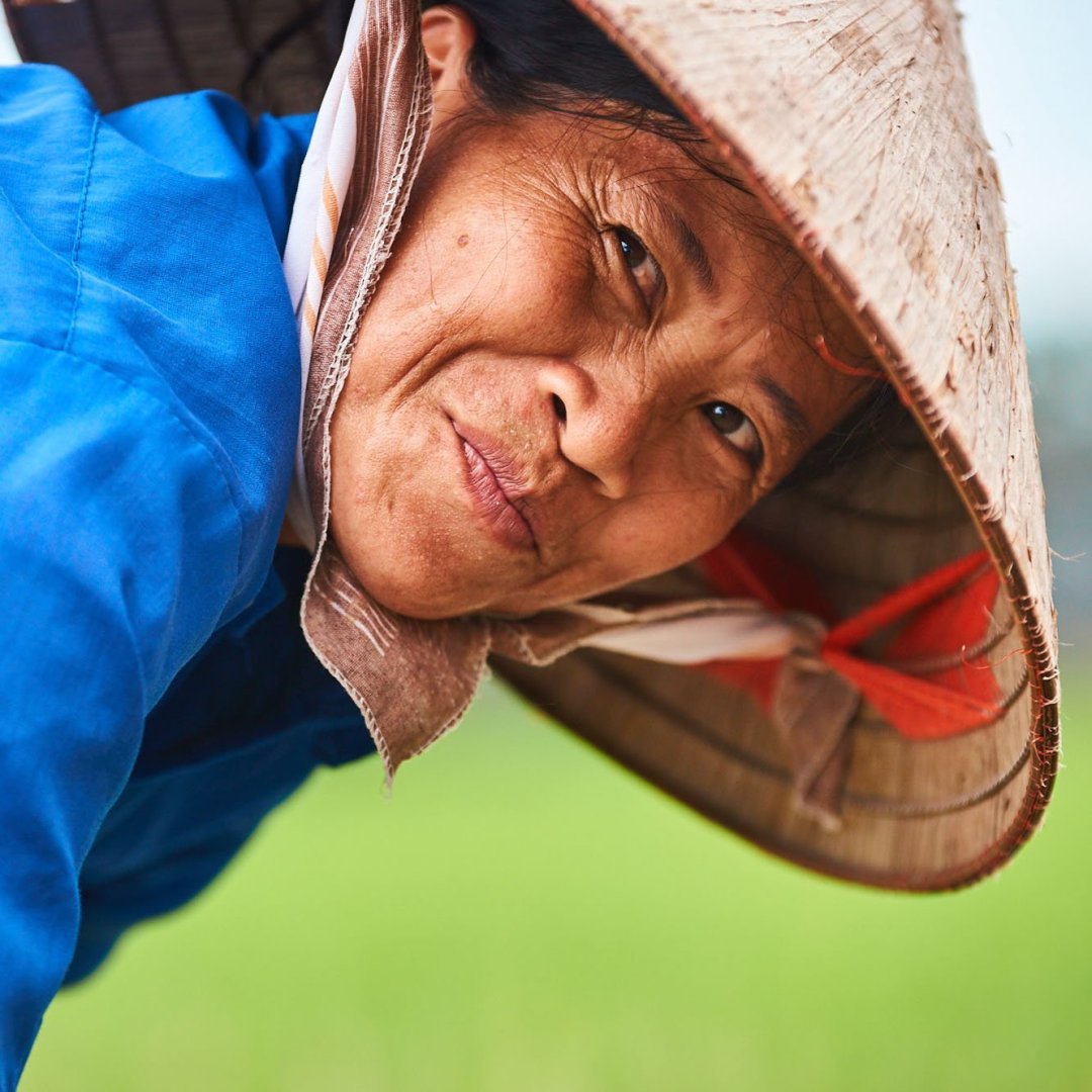 Vietnamese woman in a rice field
