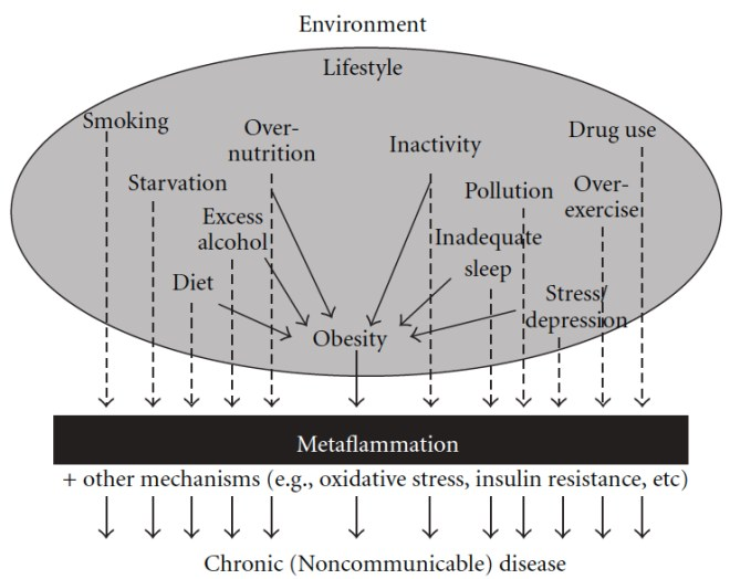 metainflammation