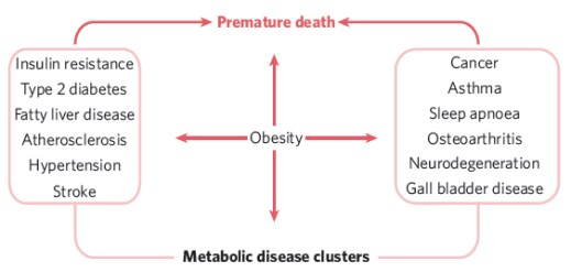 obesity_clusters