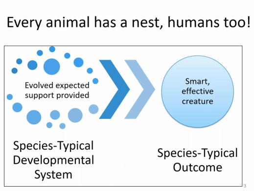 Every animal has a nest, humans too!.png
