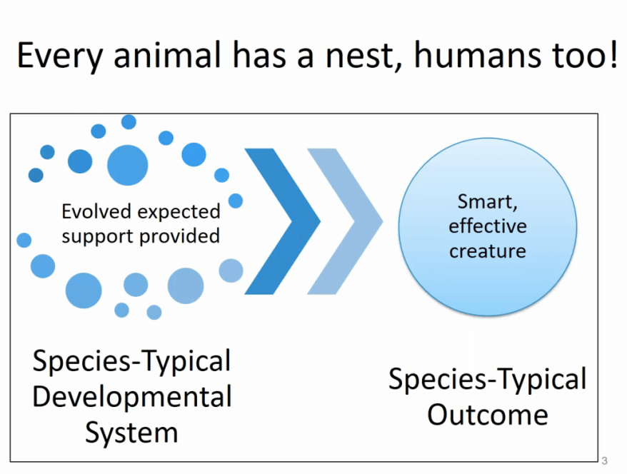every-animal-has-a-nest-humans-too