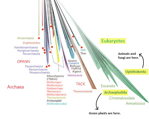 nature-tree-eukaryotes