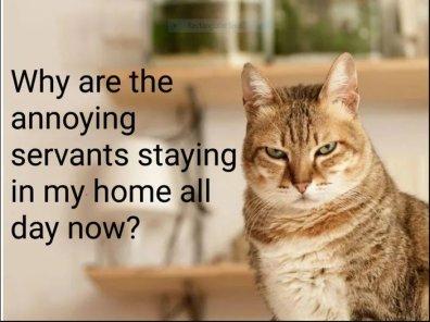 CatServants