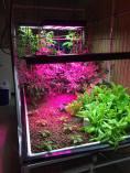 aqua crops
