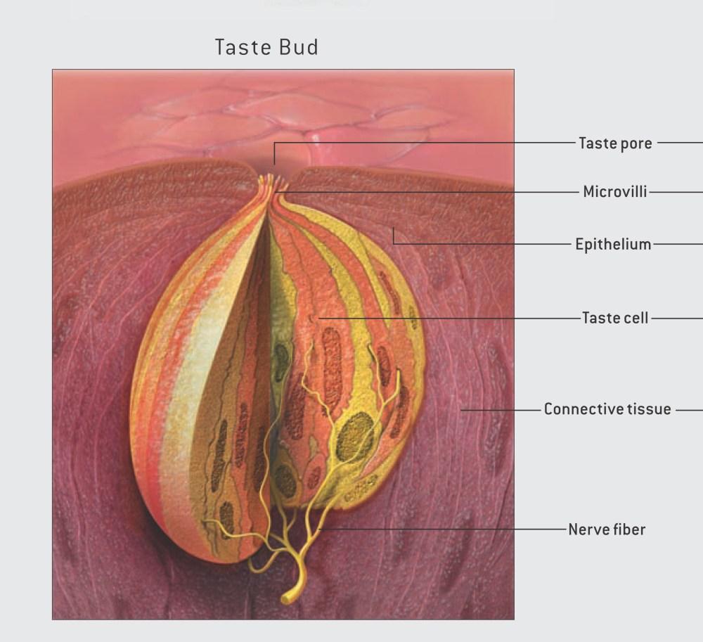 medium resolution of fig