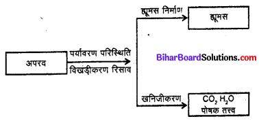 Bihar Board 12th Biology Model Question Paper 5 in Hindi 1