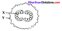 Bihar Board 12th Biology Objective Answers Chapter 1 Reproduction in Organisms 6
