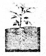 Bihar Board Class 6 Science Solutions Chapter 7 पेड़-पौधों की दुनिया 1