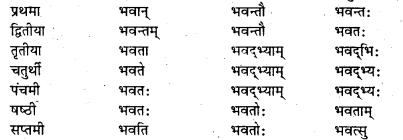 Bihar Board Class 7 Sanskrit व्याकरण शब्दरूपाणि 9