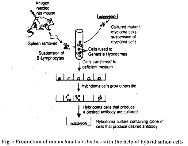 Bihar Board 12th Biology Important Questions Short Answer Type Part 5, 2