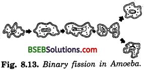 Bihar Board Class 10 Science Solutions Chapter 8 How do Organisms - 4