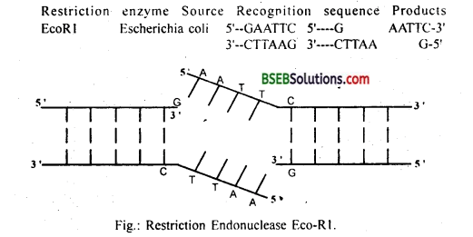 Bihar Board Class 12 Biology Solutions Chapter 11 Biotechnology Principles and Processes 1