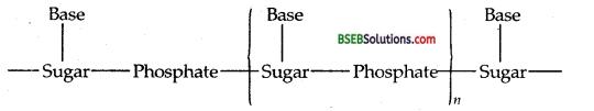 Bihar Board Class 12 Chemistry Solutions Chapter 14 Biomolecules 28