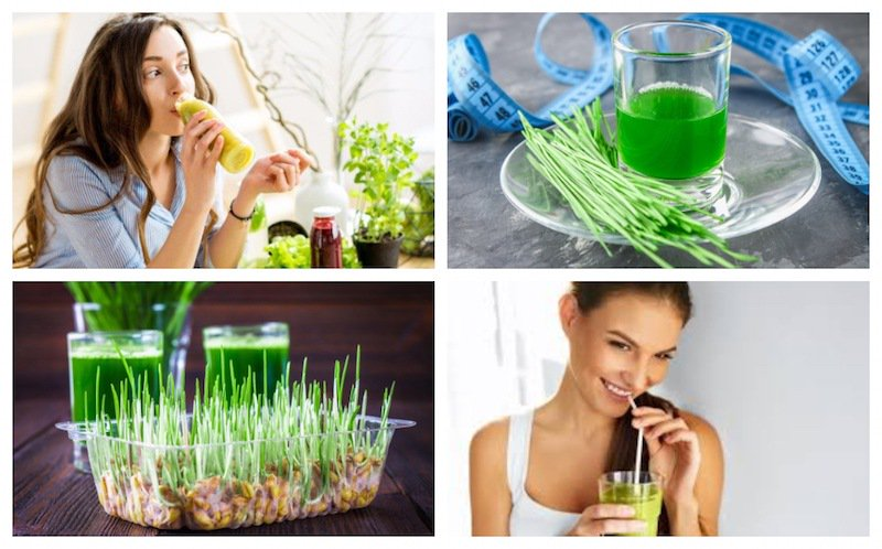 How to Consume Wheatgrass For Weight Loss