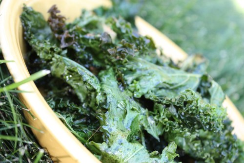 Kale Chips | bsinthekitchen.com