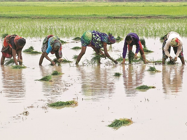 Agriculture Minister wants cheaper credit, not loan waivers