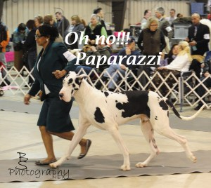 Paparazzi by Bryan Sirotkin/ BSPhotography.net