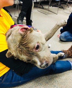 mcpl pet therapy cafe -- susie