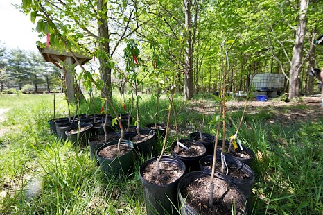 cropped 2020-05-04 garden IMG_0234
