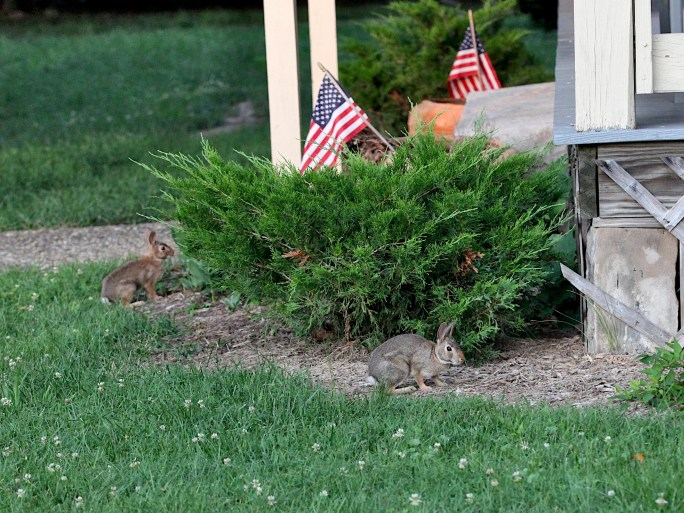 20221-07-02 better bunnies IMG_2156