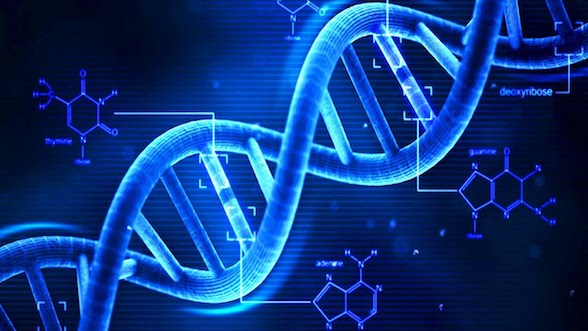 dna pic