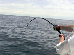 Fighting a big fish on fly offshore pushes everything to the limits. Courtesy Scott Jaunich