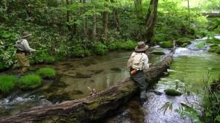 遠野の森とやさしい流れ