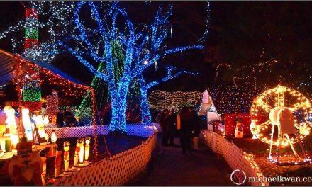 Local Tourist: Bright Nights in Stanley Park