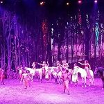 Cavalia Odysseo: VIP Experience in Vancouver