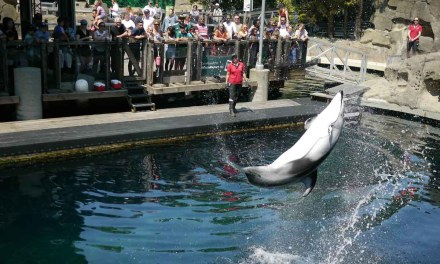 Vlog #87: The Vancouver Aquarium Experience