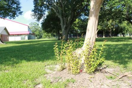 Perkins Road Community Park Baton Rouge Louisiana (11)