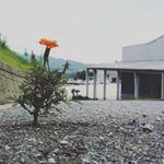 Jang Na Ra(チャン・ナラ) Instagram