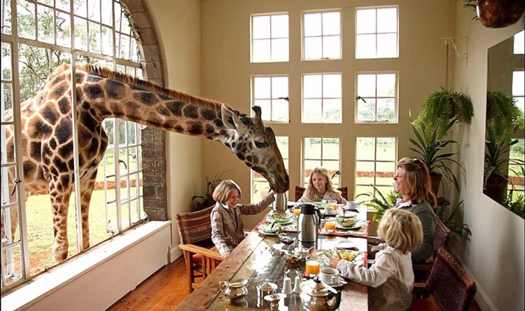 GIRAFFE MANOR FAMILY