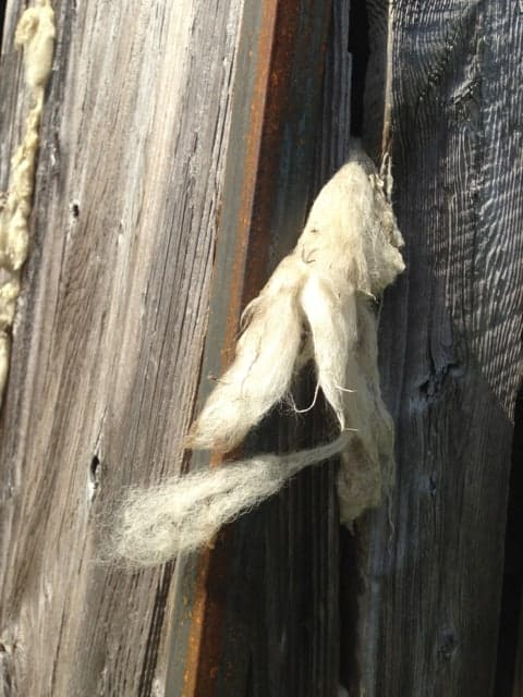 Wool on 'Landmarks' blow like tufts caught in an old barn wall or board fence. Photo by Kate Abbott