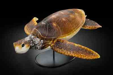 Raven Skyriver shapes a sea turtle in glass. Image courtesy of the artist.