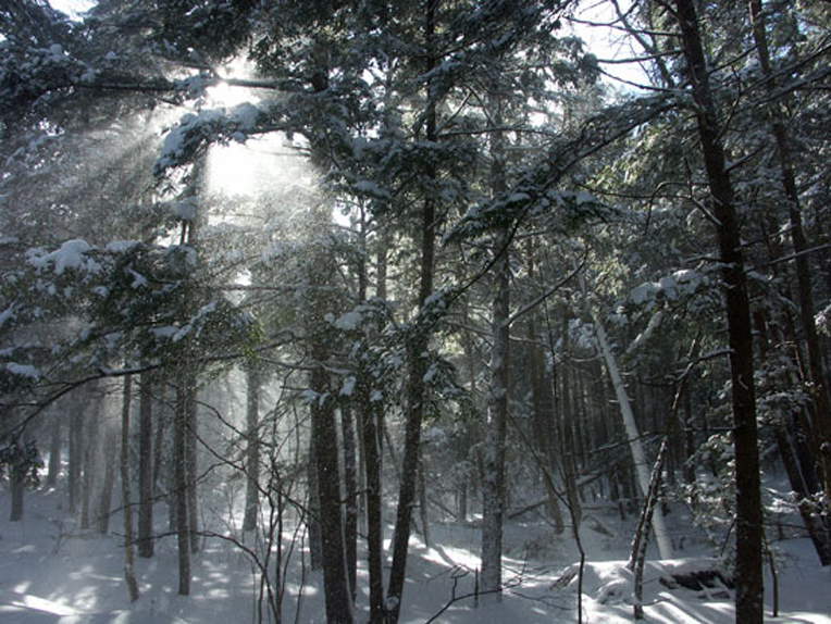 Sun shines through windblown snow in Dalton woods (Wahconah Falls State Park). Photo by Thom Smith, courtesy of the artist