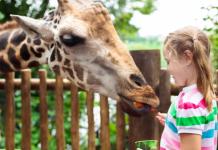 Dierentuin Giraffe Meisje Voeren wilde dieren