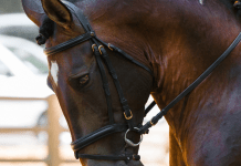 Dressuur Dressuurstal Dressuurpaard Paardrijden