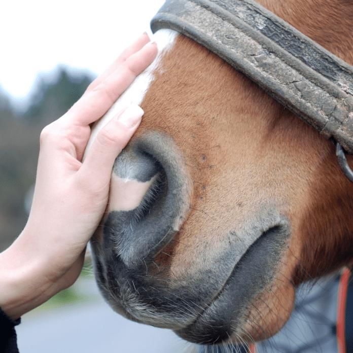 Paard Aaien Hand