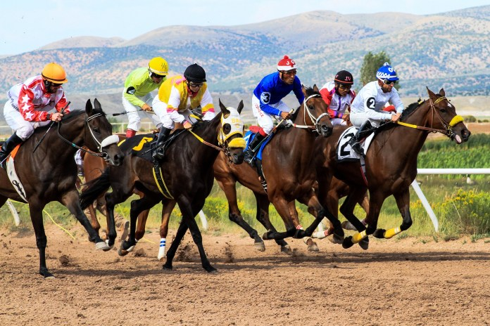 Paarden Racing Wyoming Downs Track Wedden Jockeys