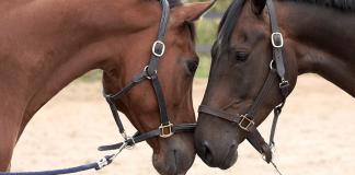 Paarden fokken racen