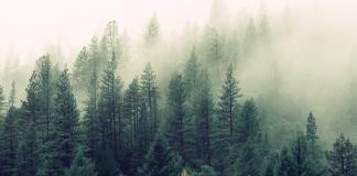 Bos Woud Bomen Mist