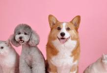 Huisdieren pets hondjes