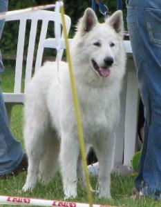 Koerauudised aastal 2007 30