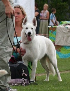Koerauudised aastal 2007 27