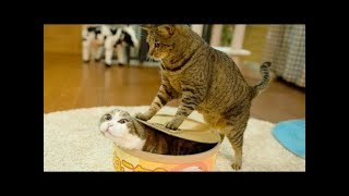 Cute is Not Enough - Cute Cats and Kittens Doing Funny Things 2018 #12