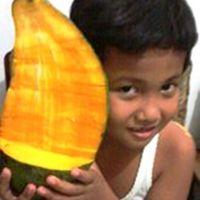 "MANGGA ""RAKSASA"" MAHATHIR (2)"