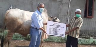 PTBA Serahkan 89 Ekor Sapi Kurban Kepada Masyarakat