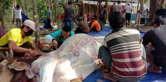 Pengajian Mushola di Sungai Lilin Potong Tiga Sap & Satu Kambing