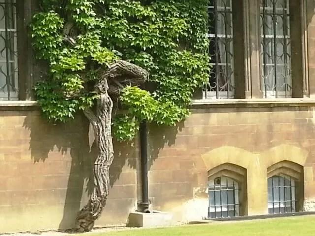 knarled tree on wall